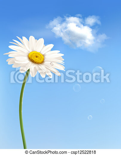 Beautiful white daisy in front of the blue sky. Vector. - csp12522818