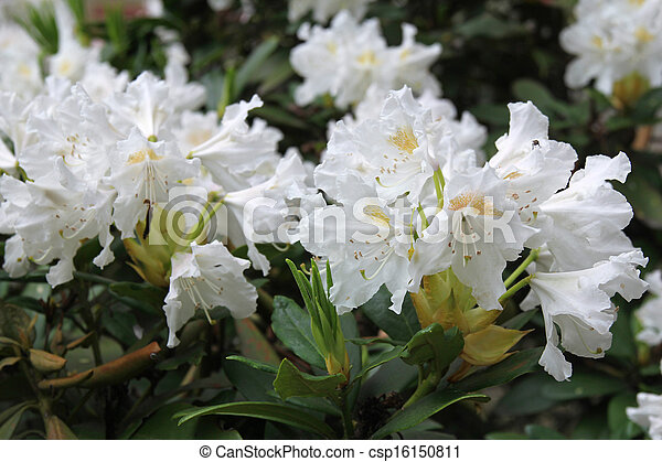 beautiful white flowers - csp16150811