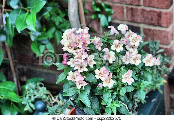 Beautiful white flowers - csp22282575
