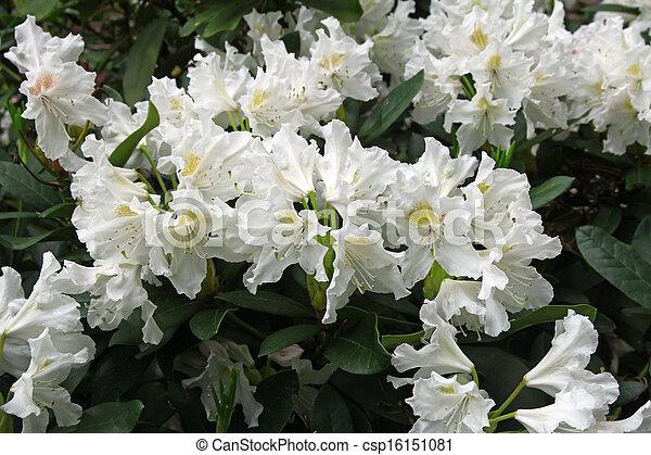 beautiful white flowers - csp16151081