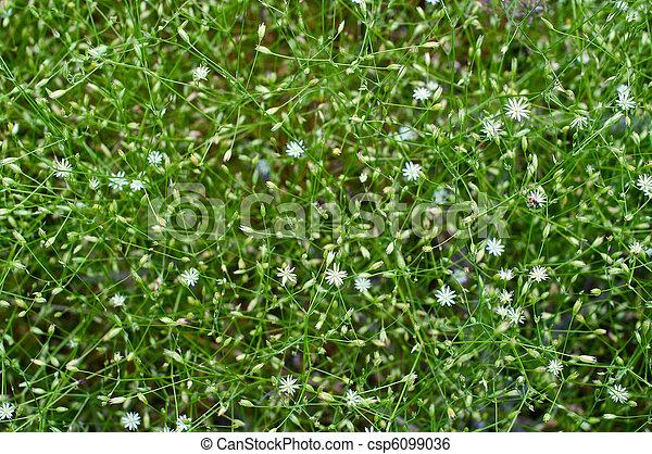 Beautiful white flowers - csp6099036
