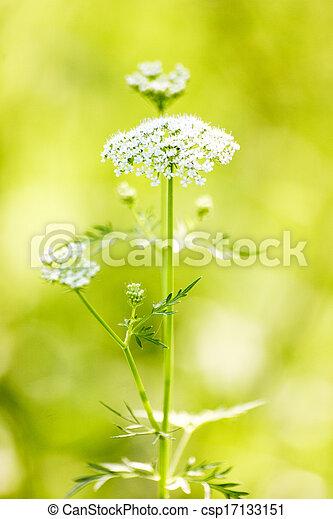 Beautiful white flowers - csp17133151