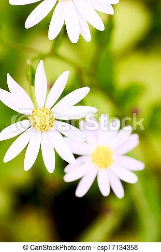Beautiful white flowers - csp17134358