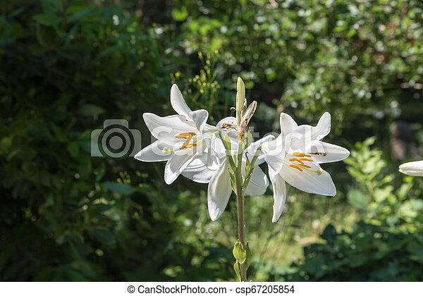 Beautiful white flowers - csp67205854