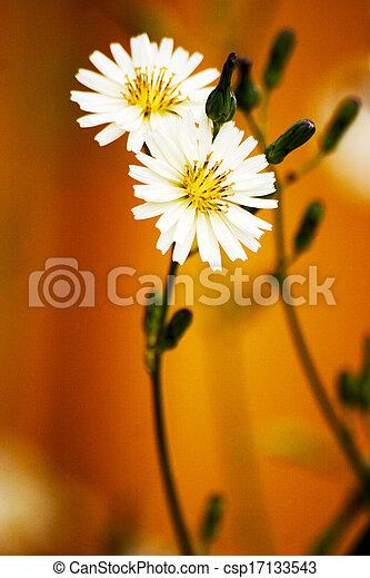 Beautiful white flowers - csp17133543