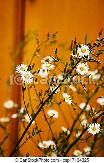 Beautiful white flowers - csp17134325