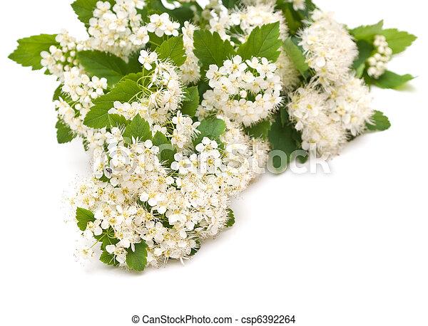 Beautiful white flowers - csp6392264