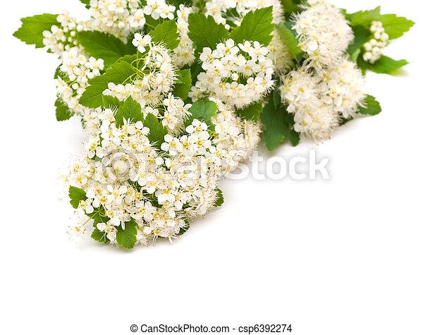 Beautiful white flowers - csp6392274