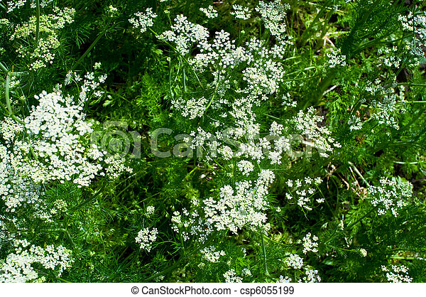 Beautiful white flowers - csp6055199