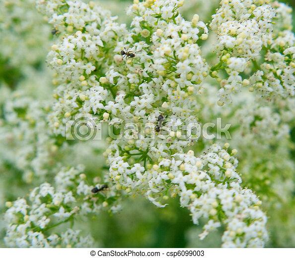 Beautiful white flowers - csp6099003