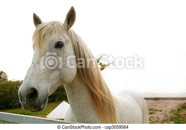 Beautiful white horse looking to camera - csp3059564