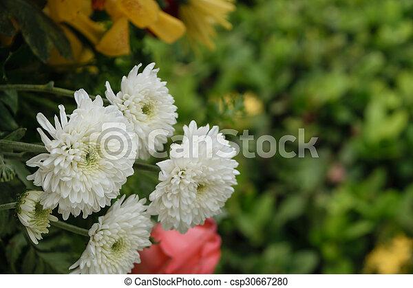 Beautiful white mum flower in a bouquet beautiful white mum flower beautiful white mum flower in a bouquet csp30667280 mightylinksfo