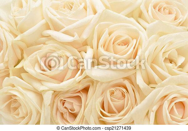 Beautiful white rose background - csp21271439