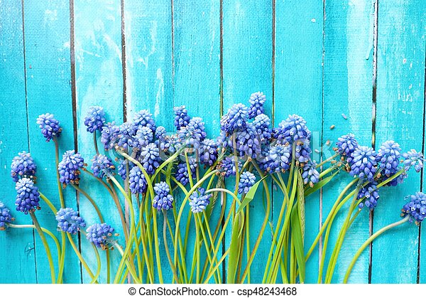 Beautiful wild blue flowers on a wooden background - csp48243468