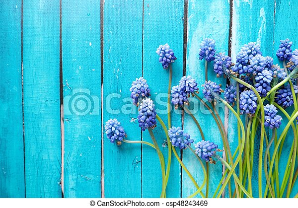 Beautiful wild blue flowers on a wooden background - csp48243469