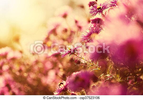 Beautiful wild pink flowers in the sunshine beautiful flowers in beautiful wild pink flowers in the sunshine csp37523106 mightylinksfo