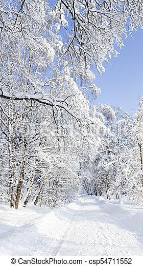 Beautiful winter landscape in the park - csp54711552