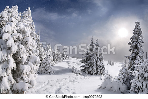 Beautiful winter landscape in the Carpathian mountains - csp9979393