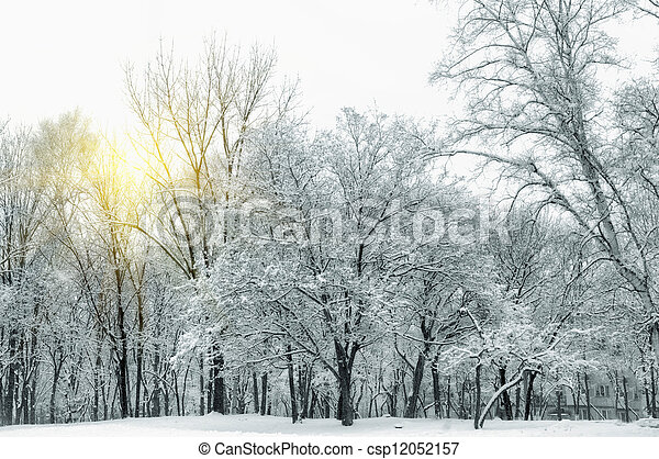 Beautiful winter landscape with snow covered trees - csp12052157