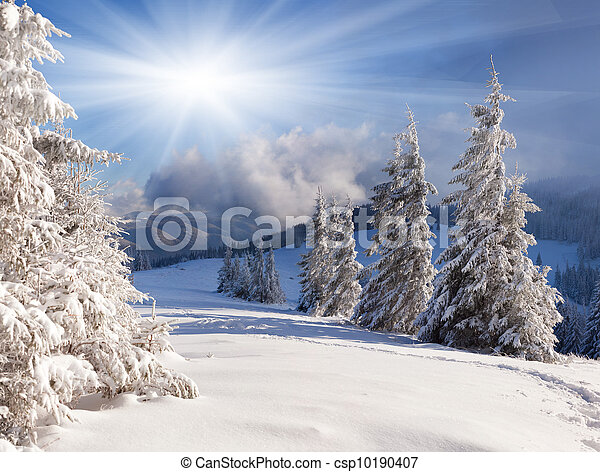 Beautiful winter landscape with snow covered trees. - csp10190407