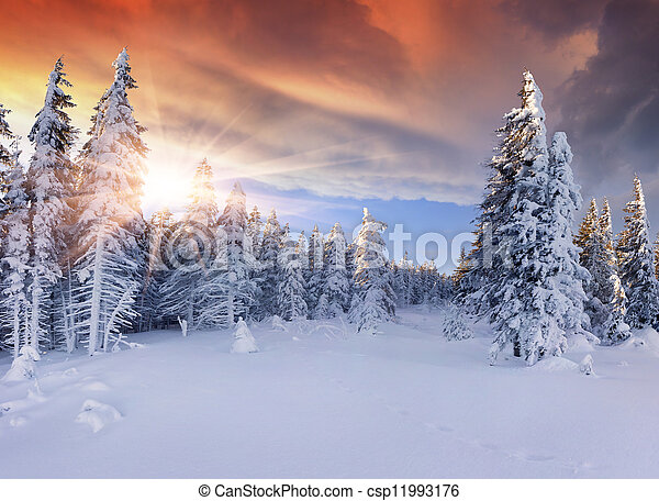 Beautiful winter sunrise in the mountains. Dramatic red sky - csp11993176