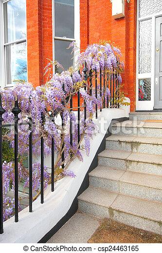 Beautiful wisteria flowers outside the house