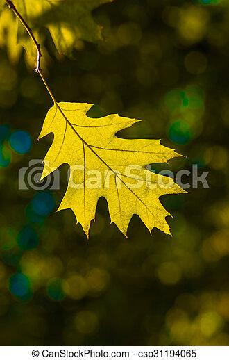 Beautiful yellow leaf in autumn background - csp31194065