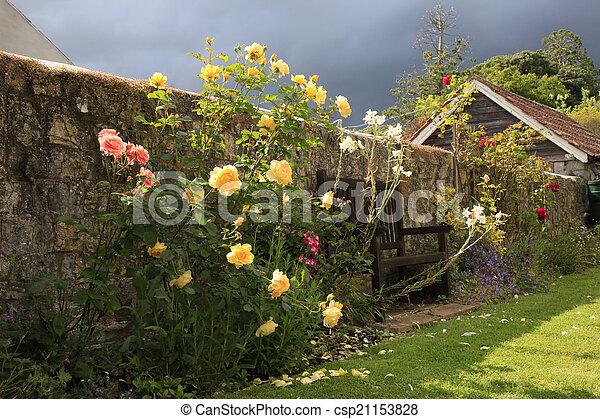 Beautiful Yellow Roses in a garden - csp21153828