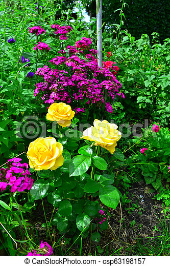 Beautiful yellow roses in garden with wildflowers, floral background - csp63198157