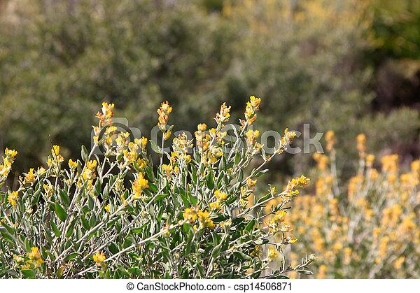 beautiful yellow wildflowers - csp14506871
