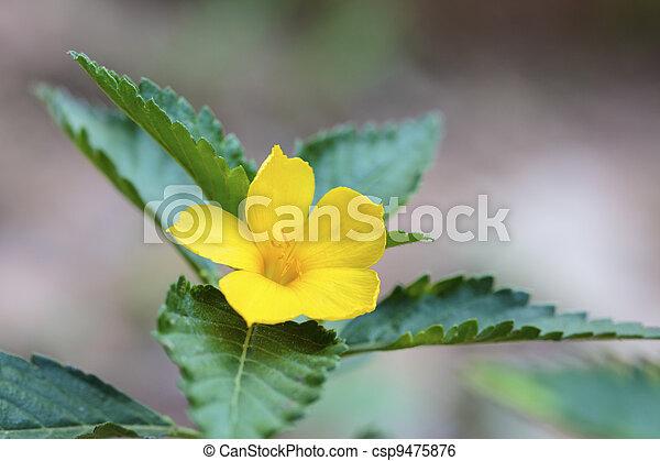 Beautiful yellow wildflowers. - csp9475876