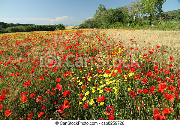 beauty of tuscan countryside - csp8259726