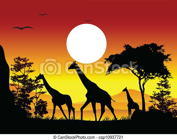 beauty silhouette of giraffe family - csp10937721