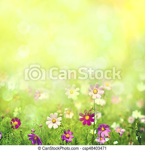 Beauty spring and summer landscape with fresh daisy flowers - csp48403471