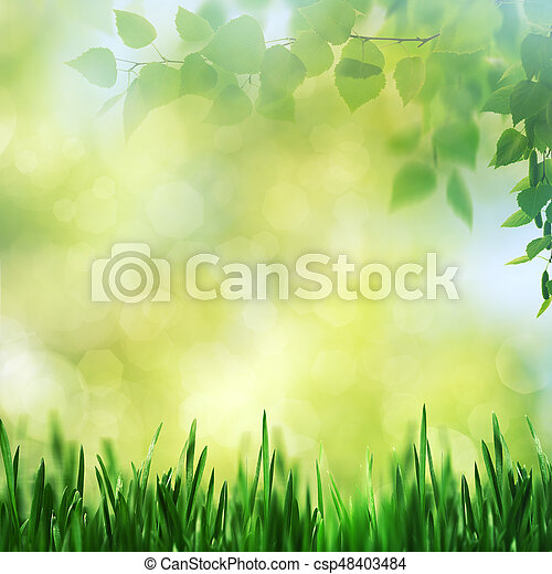 Beauty spring and summer landscape with fresh daisy flowers - csp48403484