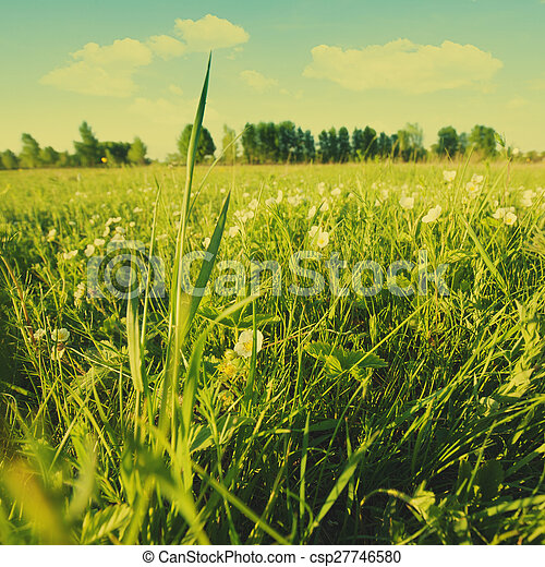 Beauty summer day on the meadow, natural landscape - csp27746580