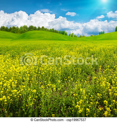Beauty summer day on the meadow, abstract rural landscape for your design - csp19967537