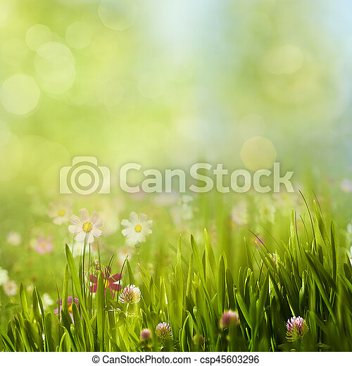 Beauty summer meadow with blooming flowers, seasonal abstract backgrounds - csp45603296