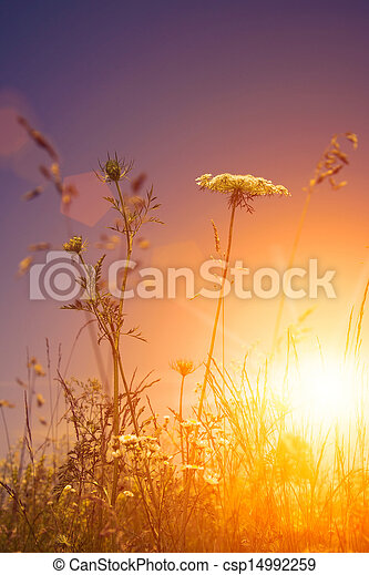Beauty wild flowers under the evening sun, environmental backgrounds - csp14992259