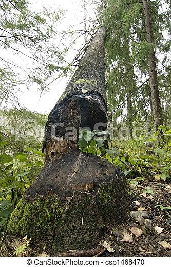 Beaver Cut - csp1468470