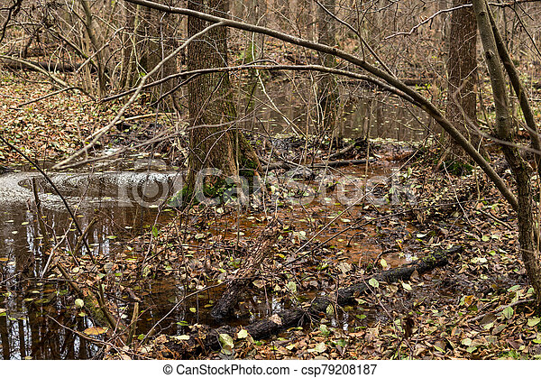 beaver dam on a small river - csp79208187