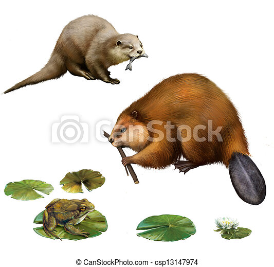 Beaver eating stick, pretty otter with a fish in its mouse, frog on lilly leaves, toad. - csp13147974