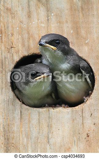 Pájaros en una casa de pájaros - csp4034693