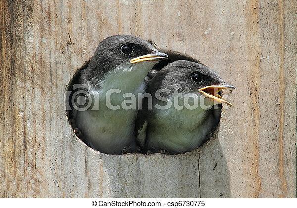Pájaros en un pajar - csp6730775