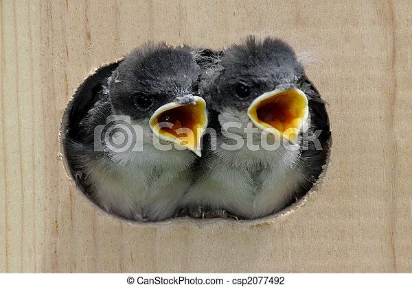 Pájaros en un pajar - csp2077492