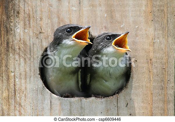 Pájaros en un pajar - csp6609446