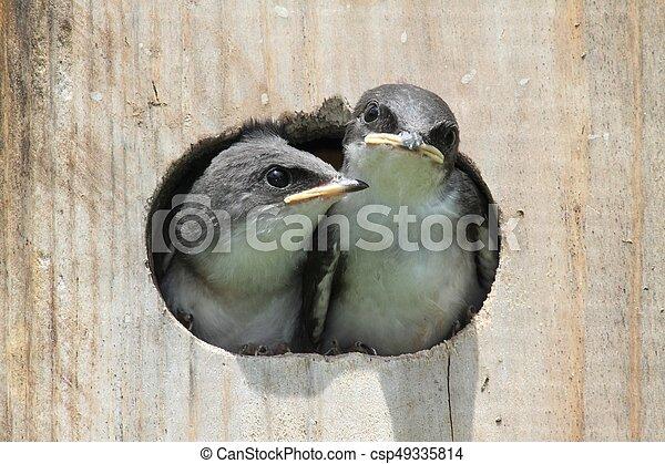 Pájaros en una casa de pájaros - csp49335814
