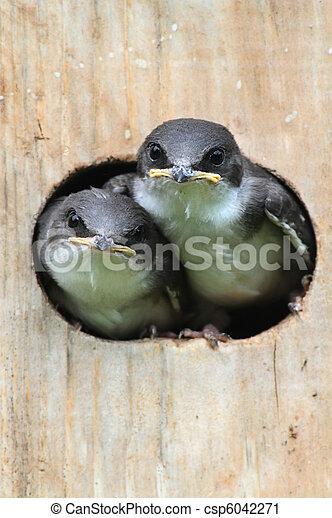 Pájaros en un pajar - csp6042271