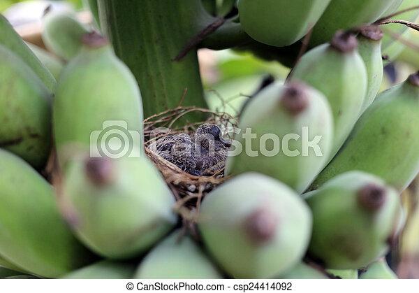 Pajaritos en un nido. - csp24414092