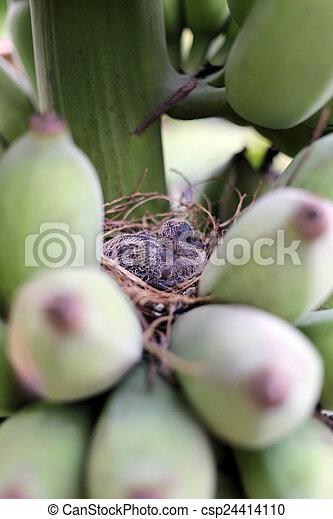 Pajaritos en un nido. - csp24414110